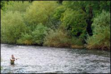 Salmon Watch Ireland also question sea lice research quoted by officials