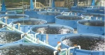 Contained Fish Farm
