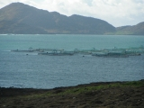 Undercurrent News, 29 Oct 2013: ISA suspected in northern Norway farms