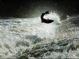 Anglers fear salmon super farm will impact local wildstocks