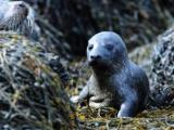 Scotland – Government ordered to reveal secret sealshooters