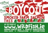 IFA Aquaculture Dismisses Call for Boycott on Smoked Salmon
