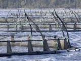 Irish Times, 8 March 2013, Letter to the Editor: Controversy Over FishFarm