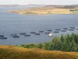 EU Fish News, 3 Jan 2014: Scottish Salmon Farms Poorly Sited