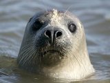 Guardian 21 May 2013: Marine Harvest agrees to limit pesticides and seal killings
