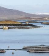 Undercurrent News, 10 Feb 2014: Bakkafrost harvests site over ISAsuspicion
