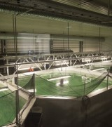 CBC News, 6 Jan 2014: Farming salmon on land is possible, projectsuggests