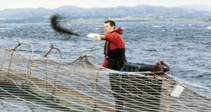salmon-farm-300x159