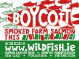 www.wildfish.ie 19 Nov 2013: Boycott Smoked Salmon This Christmas – give the environment a present