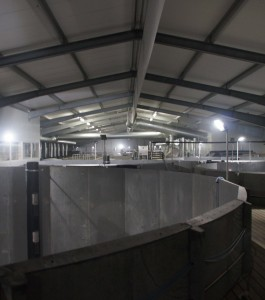 SalmonFarm-Langsand-Laks-inside-farm-265x300