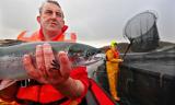 The Observer, 16 Feb 2014: Fish farms are destroying wild Scottish salmon, says leading environmentalist