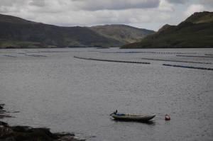 Fish+farm+Killary+Harbour