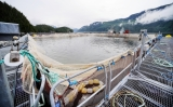 Vancouver Sun, June 12, 2015: Scientists dispute findings of provincial report that minimizes risk of aquaculture to wildsalmon